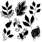 Grupo do vetor de folhas Estêncis isolados Fotos de Stock