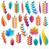 Grupo do vetor de folhas de outono dos inclinações da cor A fantasia planta ícones e elementos do projeto Ilustração dos desenhos Foto de Stock Royalty Free