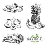 Grupo do vetor de frutas e legumes Foto de Stock Royalty Free