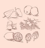 Grupo do vetor de fruto, de vegetais, de bagas e de citrino Fotografia de Stock