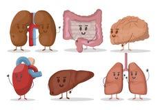 Grupo do vetor de ilustrações humanas dos órgãos internos Coração, pulmões, rins, fígado, cérebro, estômago Caráteres de sorriso ilustração royalty free
