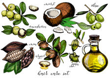 Grupo do vetor de ingredientes dos cuidados capilares Garrafa da azeitona, do argão, do coco, do cacau, da macadâmia, do jojoba e Fotos de Stock