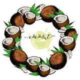 Grupo do vetor de ingredientes dos cuidados capilares Mão orgânica elementos coloridos tirados Grinalda do coco Imagem de Stock