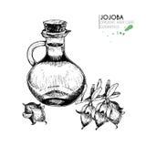 Grupo do vetor de ingredientes dos cuidados capilares Mão orgânica elementos tirados Jojoba e garrafa do óleo Imagens de Stock Royalty Free