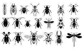 Grupo do vetor de insetos Imagem de Stock