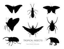 Grupo do vetor de insetos tropicais ilustração royalty free