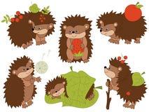 Grupo do vetor de ouriços bonitos dos desenhos animados ilustração stock