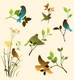 Grupo do vetor de pássaros e de galhos Fotografia de Stock