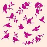 Grupo do vetor de pássaros e de galhos Foto de Stock Royalty Free