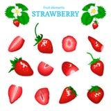 Grupo do vetor de uma morango vermelha fresca O corte da baga, parte de meia fatia sae, flor Coleção da morango madura Imagem de Stock Royalty Free