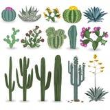 Grupo do vetor do cacto e da planta carnuda Fotografia de Stock