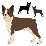 Grupo do vetor do terrier de Boston Imagem de Stock Royalty Free