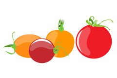 Grupo do vetor do tomate Fotos de Stock Royalty Free