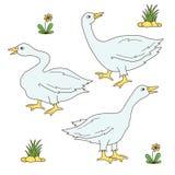 Grupo do vetor dos ícones dos pássaros da exploração agrícola do ganso do ganso ilustração stock