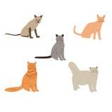 Grupo do vetor dos gatos dos desenhos animados Fotos de Stock