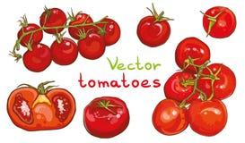Grupo do vetor Ilustração de tomates de cereja e de tomates Foto de Stock Royalty Free