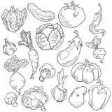 Grupo do vetor mão diferente de vegetal tirado ilustração royalty free