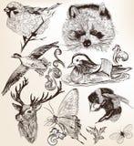 Grupo do vetor mão detalhada de animais tirados no estilo do vintage Fotografia de Stock Royalty Free