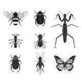 Grupo do volume 4 dos insetos do vetor Imagem de Stock Royalty Free
