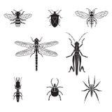 Grupo do volume 3 dos insetos do vetor Imagem de Stock