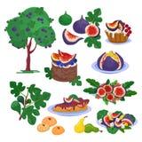 Grupo doce orgânico saudável frutado fresco do frescor da ilustração do alimento do vetor do figo e da sobremesa dos figos maduro ilustração royalty free