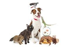 Grupo doméstico dos animais de estimação junto com o espaço da cópia imagem de stock royalty free