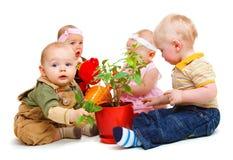 Grupo dos bebês Imagem de Stock