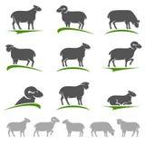 Grupo dos carneiros e do cordeiro Vetor Foto de Stock