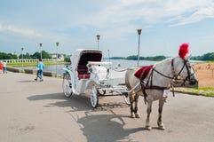 Grupo dos cavalos do prazer no fundo do pátio de Yaroslav em Veliky Novgorod, Rússia - arquitetura da cidade da manhã do verão Fotografia de Stock Royalty Free