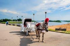 Grupo dos cavalos do prazer no fundo do pátio do ` s de Yaroslav em Veliky Novgorod, Rússia - arquitetura da cidade da manhã do v Fotografia de Stock Royalty Free
