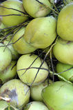 Grupo dos cocos Foto de Stock