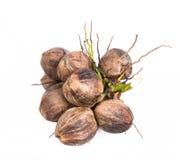 Grupo dos cocos Fotos de Stock Royalty Free