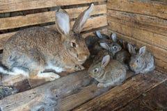 Grupo dos coelhos Fotografia de Stock