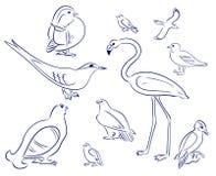 Grupo Dos Desenhos Animados Dos Passaros Flamingo Gaivota Pato