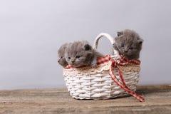 Grupo dos gatinhos em uma cesta Fotos de Stock