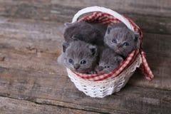 Grupo dos gatinhos em uma cesta Imagens de Stock Royalty Free
