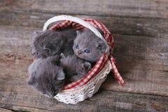 Grupo dos gatinhos em uma cesta Foto de Stock