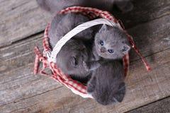 Grupo dos gatinhos em uma cesta Imagem de Stock Royalty Free
