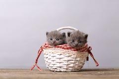 Grupo dos gatinhos em uma cesta Fotografia de Stock