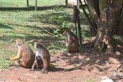 Grupo dos macacos imagem de stock royalty free