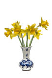 Grupo dos narcisos amarelos em um vaso do azul das louças de Delft Fotografia de Stock Royalty Free