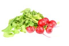 Grupo dos radishes. fotografia de stock royalty free