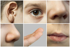 Grupo dos sentidos humanos Foto de Stock Royalty Free