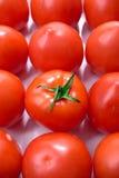 Grupo dos tomates Fotografia de Stock Royalty Free