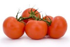 Grupo dos tomates Imagens de Stock Royalty Free