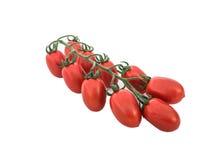 Grupo dos tomates Fotos de Stock Royalty Free