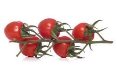 Grupo dos tomates da videira cortados Imagens de Stock Royalty Free