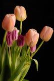 Grupo dos tulips 1 Foto de Stock Royalty Free