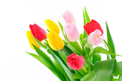 Grupo dos tulips Fotografia de Stock