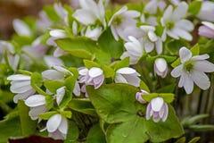 Grupo dos Wildflowers em Forest Floor In Springtime fotografia de stock royalty free
